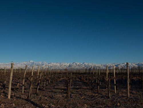 Um lindo vinhedo, no inverno de Mendoza
